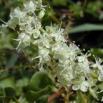 Invasive alien plant species update